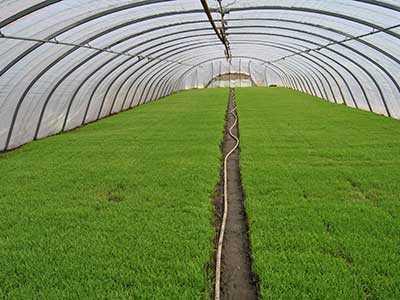 大棚蔬菜种植要变温管理